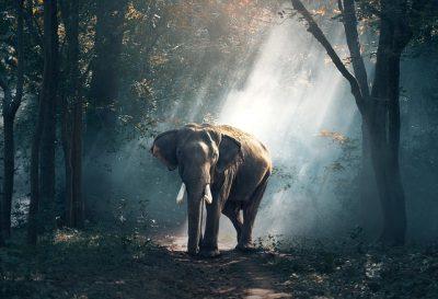Waldspaziergang the elephant walk