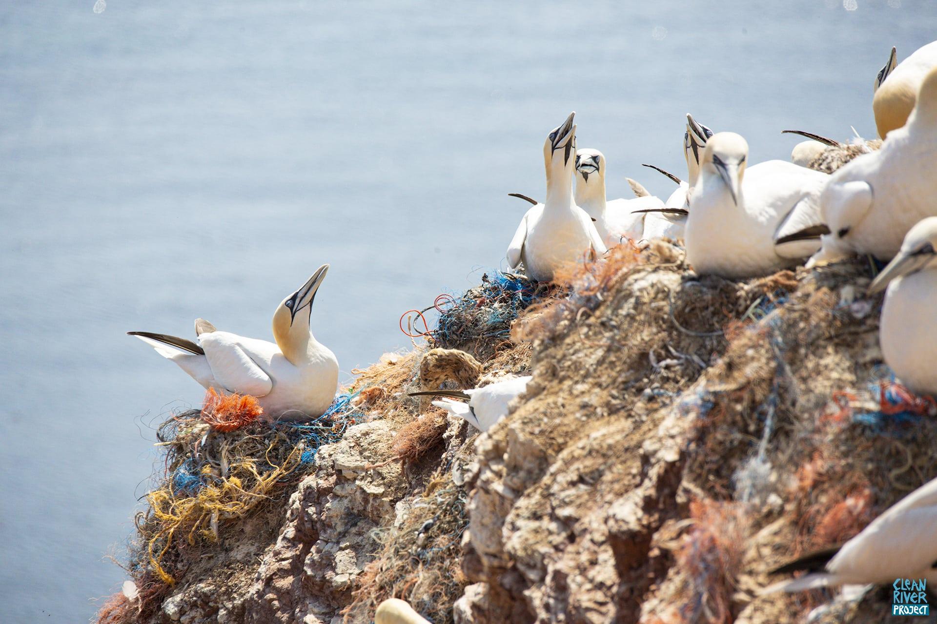 plastik müll im meer